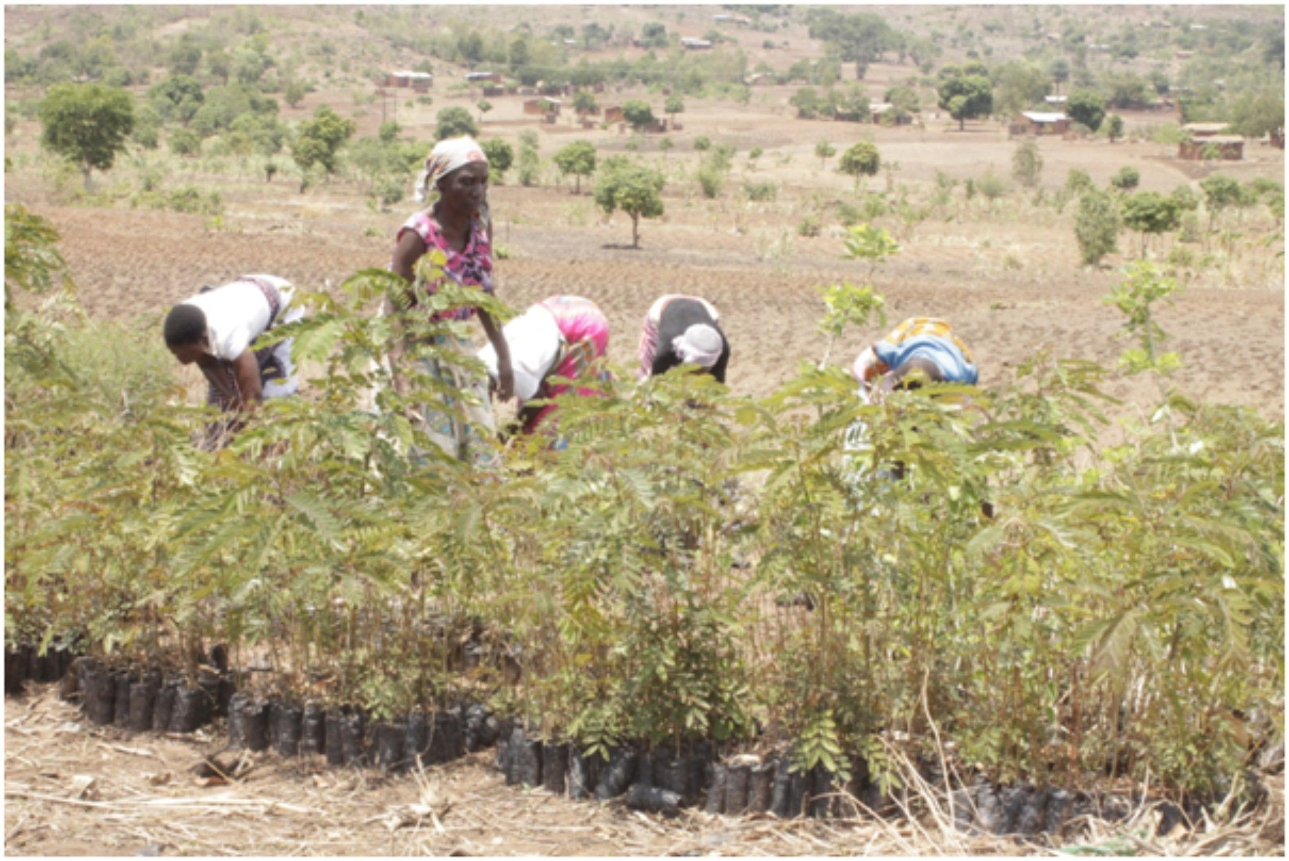 wfp-dapp-malawi-mitigating-the-impact-of-climate-change