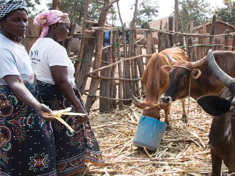 building-resilience-in-rural-farming