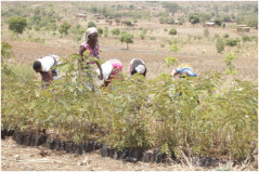 WFP DAPP Malawi mitigating the impact of climate change
